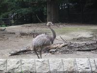 IMG_動物園3696