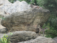 IMG_動物園3677