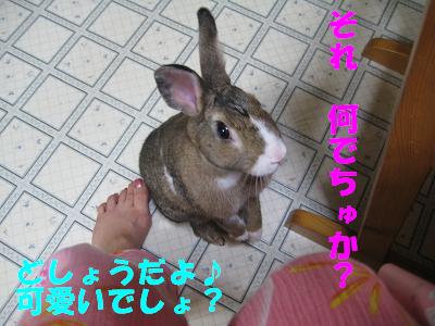 IMG_たっち3778