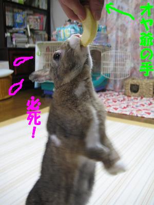 IMG_たっち3858