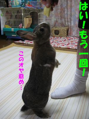 IMG_たっち3864
