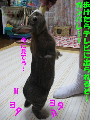 IMG_たっち3865