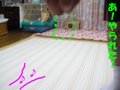 IMG_たっち3870