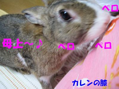 IMG_ごはん4038