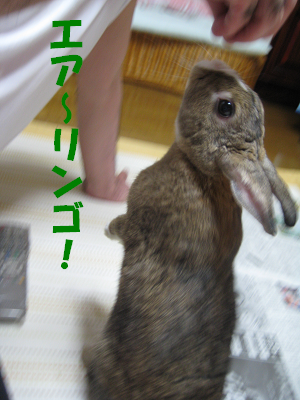 IMG_オヤ爺3851