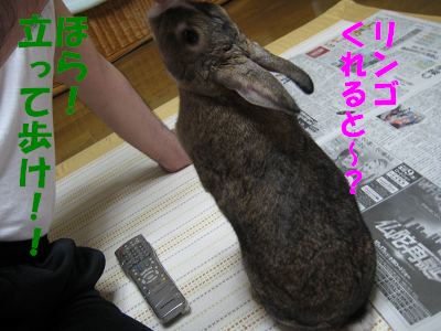 IMG_オヤ爺3849