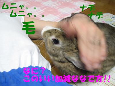 IMG_撫でて4110