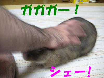 IMG_撫でて4112