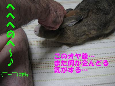 IMG_撫でて4116