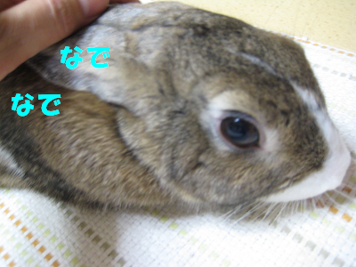 IMG_舐め4133