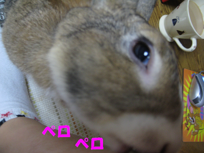 IMG_舐め4139