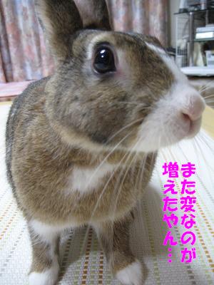 IMG_舐め4142