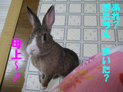 IMG_待ち4174