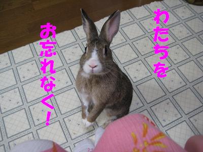 IMG_待ち4177