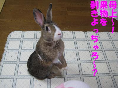 IMG_待ち4178