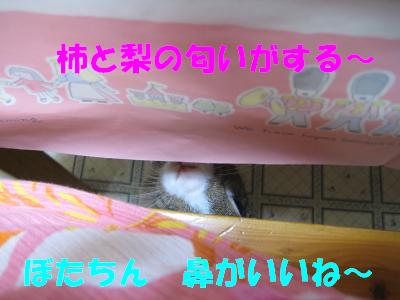 IMG_待ち4183