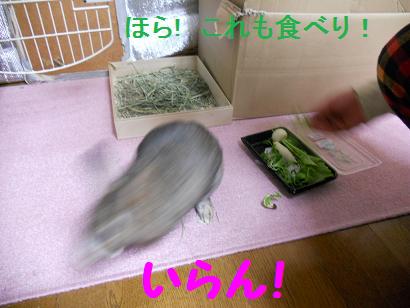 DSCN七草6615