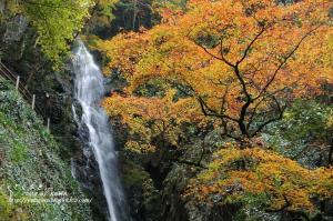3白滝DSC_76590001