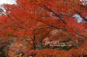 5稲荷山DSC_77940001