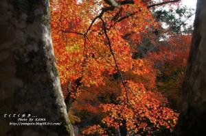 6稲荷山DSC_78030001