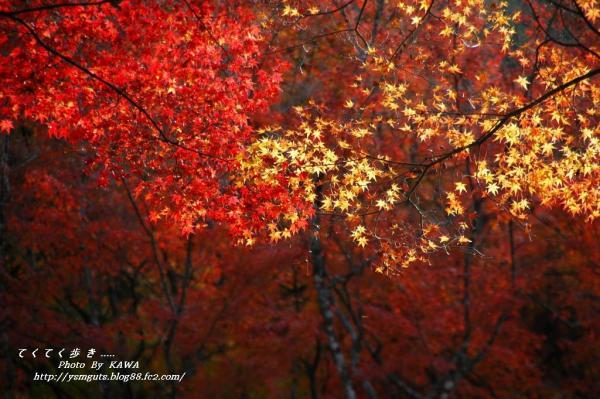 7稲荷山DSC_78160001