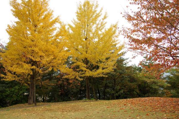 6総合公園DSC_79460001
