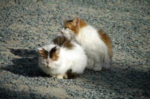 6猫DSC_88250001