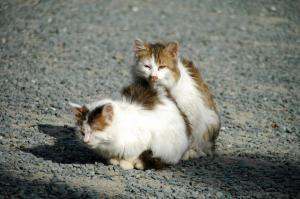 7猫DSC_88270001