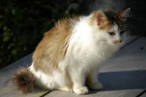 12猫DSC_88410001