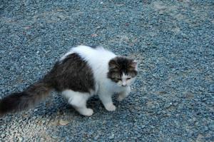 15猫DSC_88360001