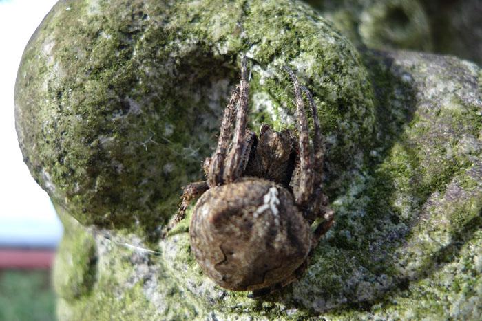 野生 生物 蜘蛛 食糧危機