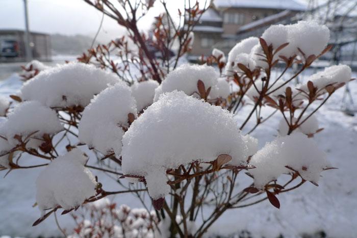 雪の花 ひだ 高山 気功 教室 日之本元極