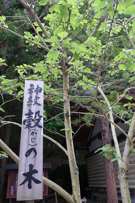 諏訪神社 上社 神紋 穀(かじ)の木 日之本元極