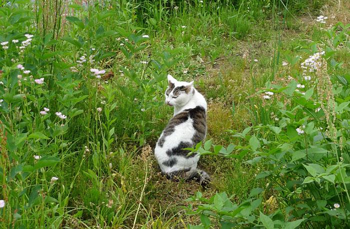 愛玩 ネコ 猫 根古 飛騨 高山 日之本元極