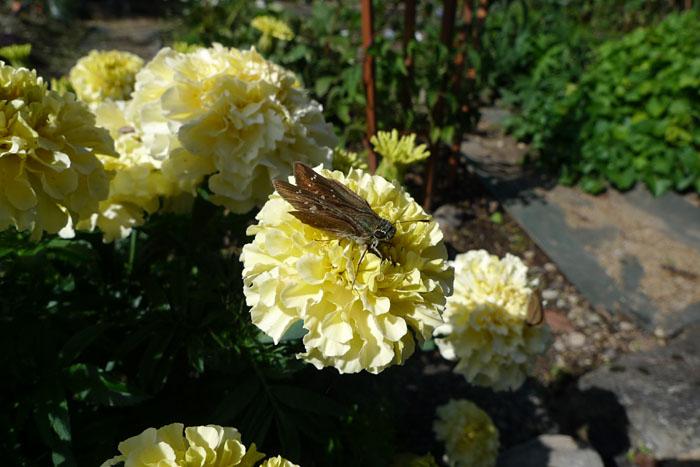 はな 華 花 ちょう 蝶 ひだ たかやま 日之本元極