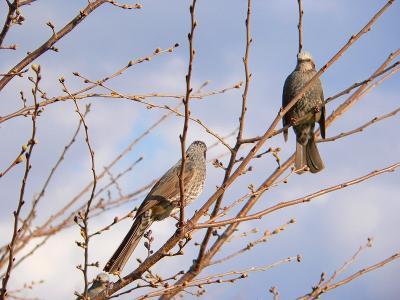写真キャプション=花の開花を待っている野鳥