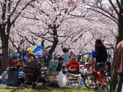 写真キャプション=多くの花見客で賑わった城北公園
