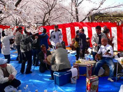 写真キャプション=桜の下で沖縄民謡を三線で奏でるネイティブのミュージシャン