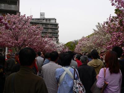 """写真キャプション=""""桜の通り抜け""""を楽しむ多くの人たち"""