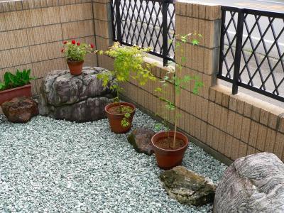 佐渡の家の前庭に佐渡屋太郎が植えたモミジの苗木。実に風流な眺めとなった