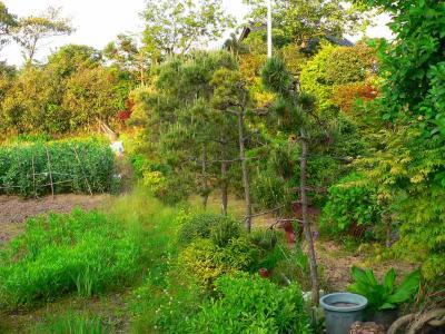 写真キャプション=盆栽用に苗木を掘り起こしたジャングル植物園の入口