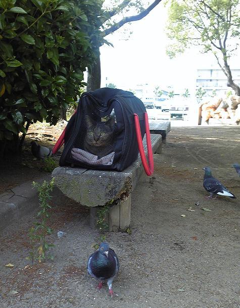 chikoと鳩