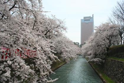 120412_前橋公園(桜&県庁))