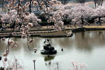 120412_前橋公園(さちの池)