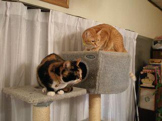 猫たち 036