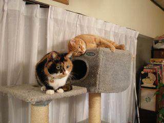 猫たち 039