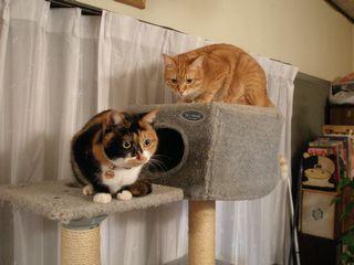 猫たち 038