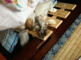 猫たち 042