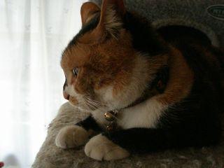 ネコたち 006