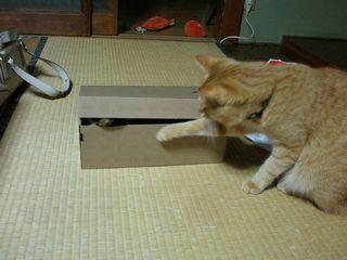 ネコたち 013